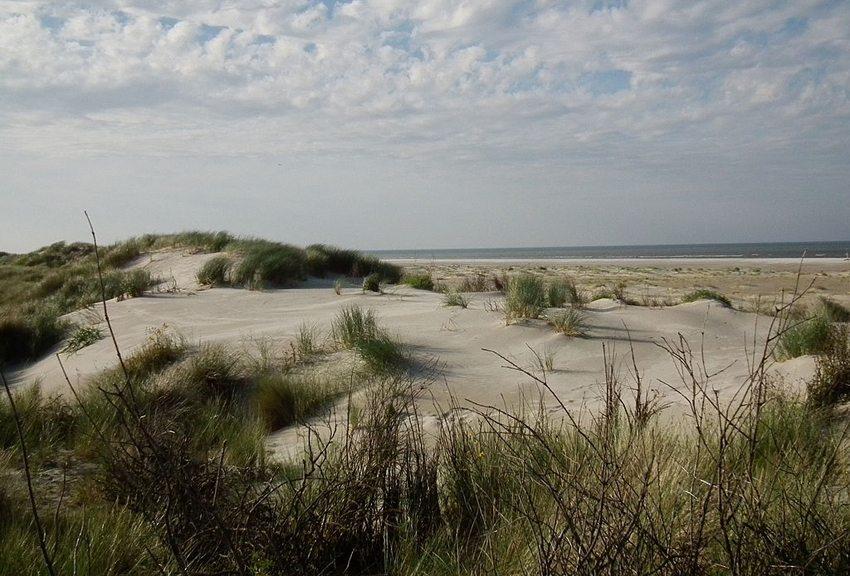 Kalfamer auf der ostfriesischen Nordseeinsel Juist, Niedersachsen (Bild: 4028mdk09, Wikimedia, CC)