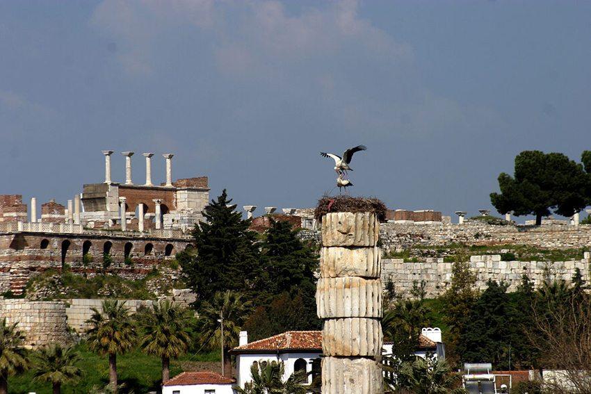 Tempel der Artemis in Ephesos mit Weissstörchen (Bild: Brocken Inaglory, Wikimedia, GNU)