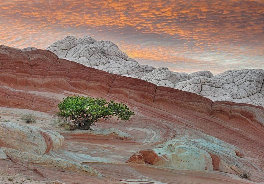 Painted Desert – die bunten Felsen von Arizona (Bild: John Fowler, WIkimedia, CC)