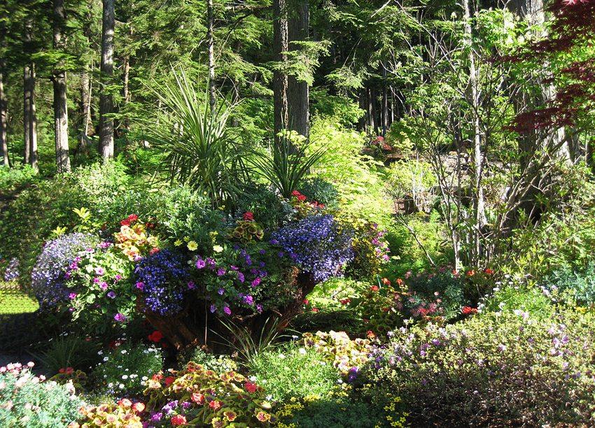 Glacier Gardens in der Nähe von Juneau, Alaska (Bild: Wendy Cutler, Wikimedia, CC)