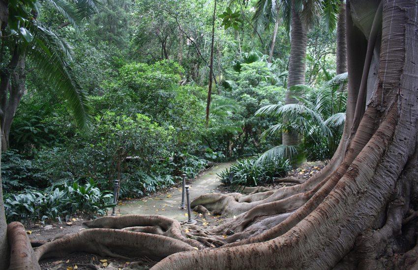 Im Botanischen Garten von Malaga (Bild: rosergoula, Wikimedia, CC)
