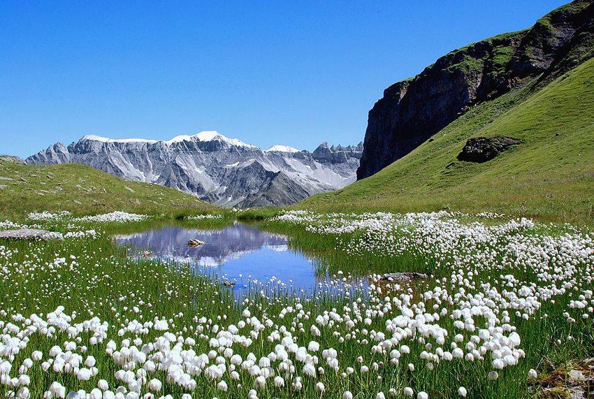 Glarner Alpen – der von Wollgras gesäumte Ablauf des Chüebodensees (Bild: Matthias Zepper, Wikimedia, CC)