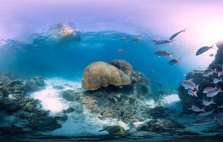 Unterwasserwelt auf Heron Island (Bild: Underwater Earth, Wikimedia, CC)