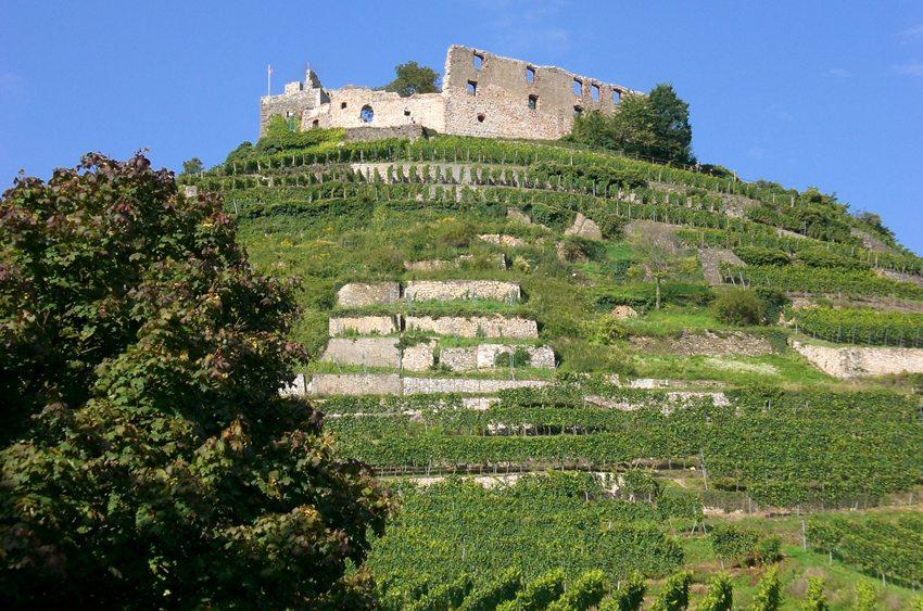 Burgruine Staufen im Breisgau, Deutschland (Bild: CHEck  / pixelio.de)