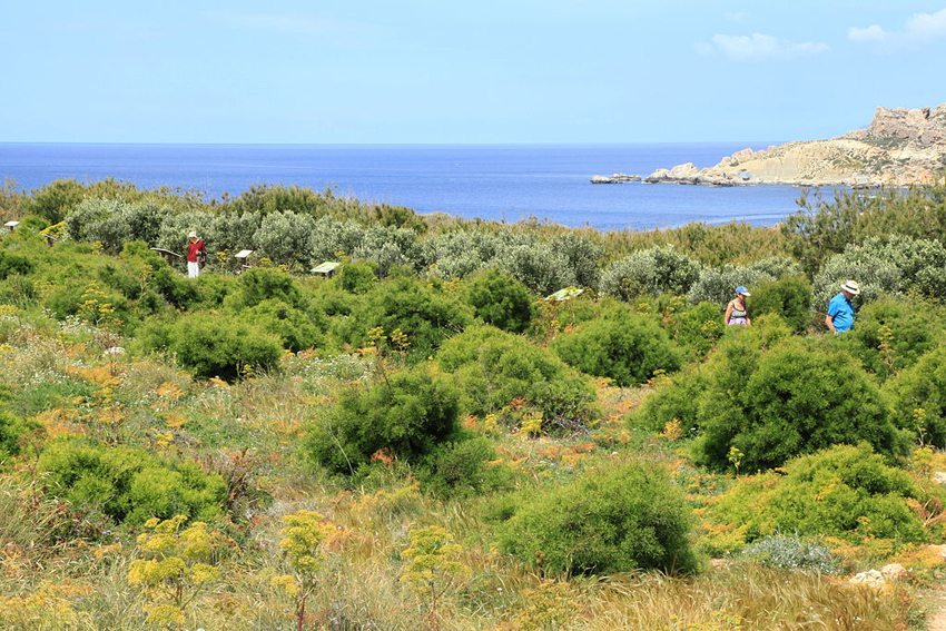 Wandern auf Malta (Bild: Frank Vincentz, Wikimedia, GNU)