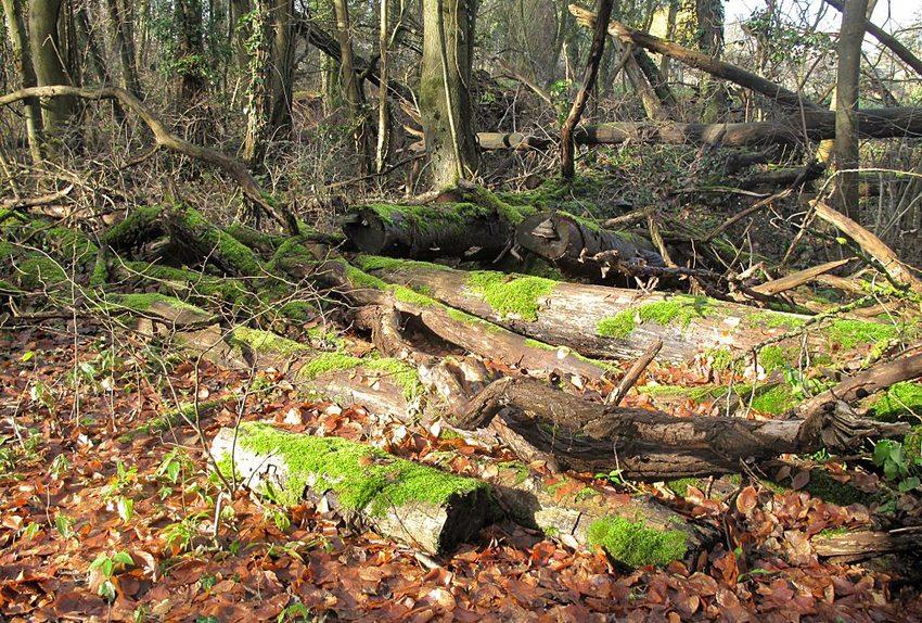 Gerade im Herbst lohnt sich ein Ausflug ins Arboretum Aubonne. (Bild: Alain Rouiller, Wikimedia, CC)