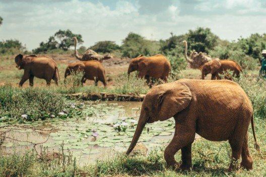 Elefanten im Nairobi-Nationalpark (Bild: © Max Smolyar - shutterstock.com)