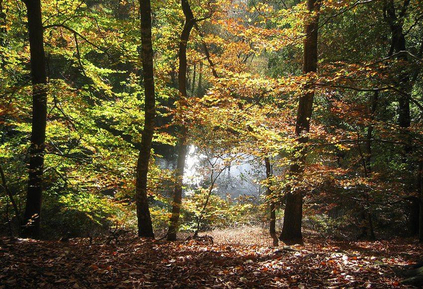 Dötlingen-Hunte im Herbst (Bild: Frank Poppe, Wikimedia, CC)
