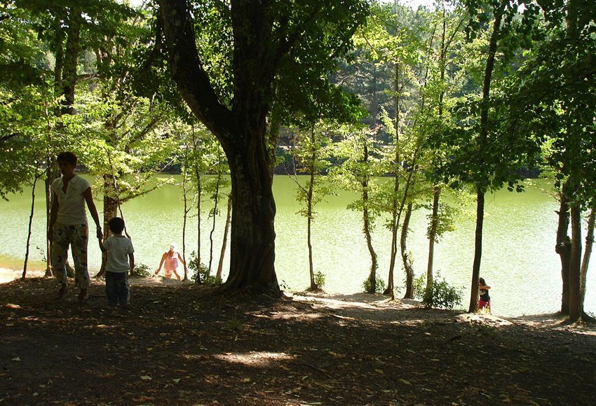 Foresta Umbra in Gargano (Bild: LucaLuca, Wikimedia, GNU)
