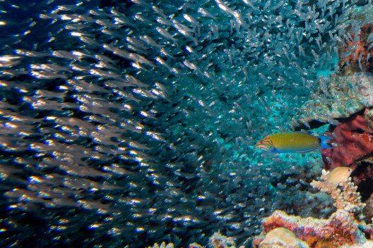 Der Wassersport wird auf den Malediven besonders gross geschrieben. (Bild: © Andrea Izzotti - shutterstock.com)
