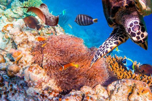 Wunderbare Unterwasserwelt (Bild: © Andrey Armyagov - shutterstock.com)
