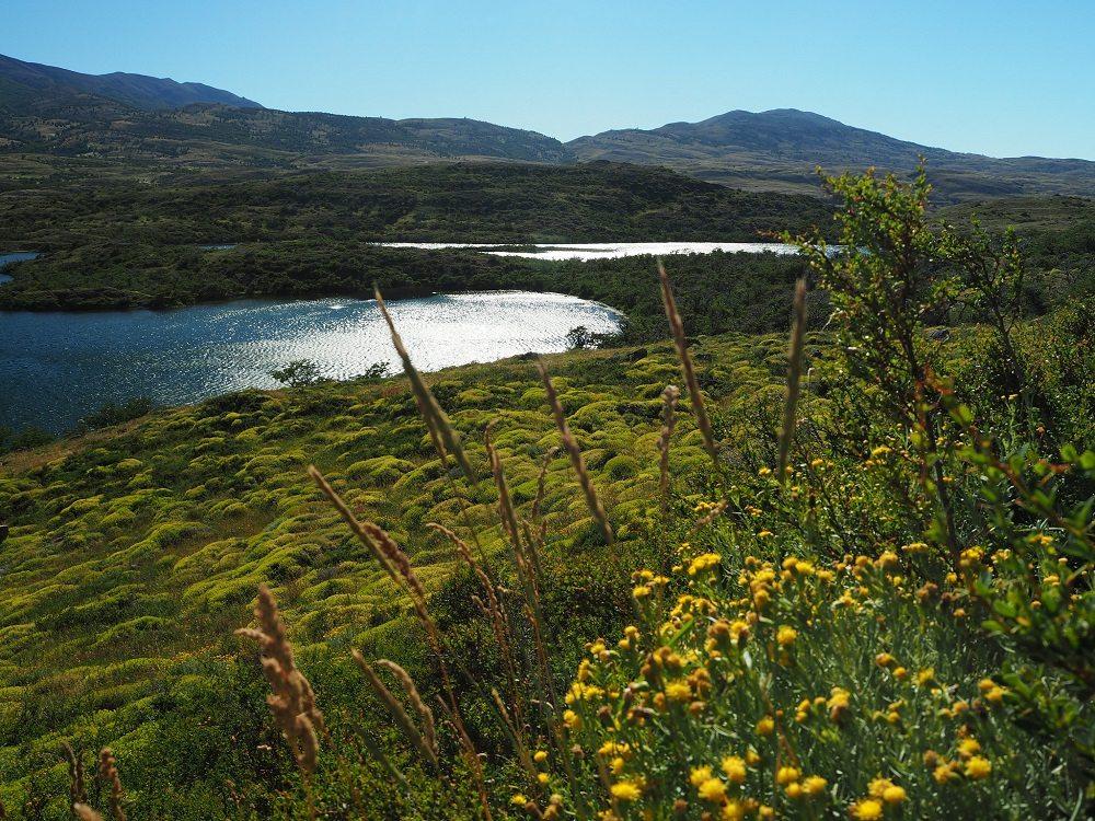 Durch Blumenwiesen auf dem Weg zum Campamento Dickson (Bild: © Constantin Schaible)