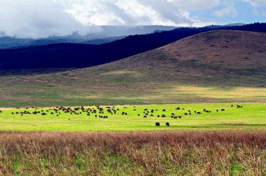 Die grosse Abgeschlossenheit des Gebiets hat den Ngorongoro-Krater zu einem Reservat für viele Tierarten gemacht. (Bild: Sajjad Sherally Fazel, Wikimedia, CC)