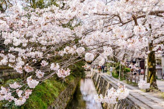 """""""Tetsugakuno-michi"""", auf Deutsch """"Philosophenweg"""", in Kyoto. (Bild: Sean Pavone / Shutterstock.com)"""