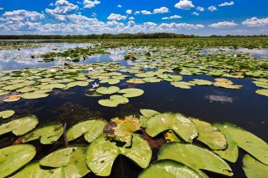 Eine große Vielfalt an Pflanzenarten findet sich im Donau-Delta.