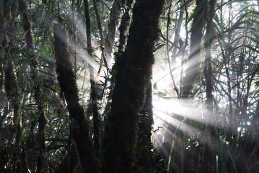 Der Dschungel von Gunung Mulu (Bild: © Andrea Sanfilippo - shutterstock.com)