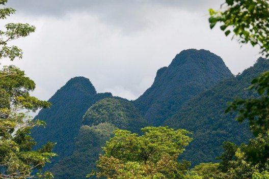 Dschungel von Gunung Mulu (Bild: © Juhku - shutterstock.com)