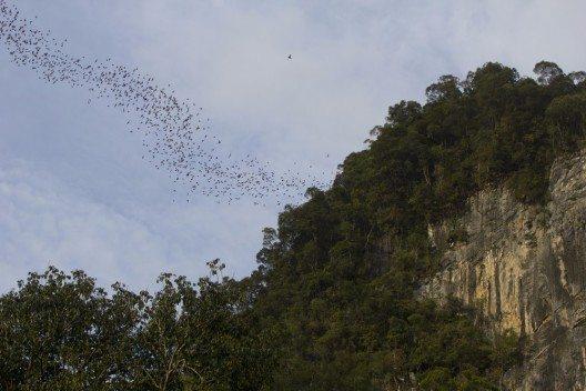 Fledermäuse verlassen eine Höhle im Mulu National Park. (Bild: © corlaffra - shutterstock.com)