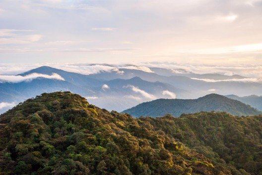 Dschungel von Gunung Mulu (Bild: © dinozzaver - shutterstock.com)