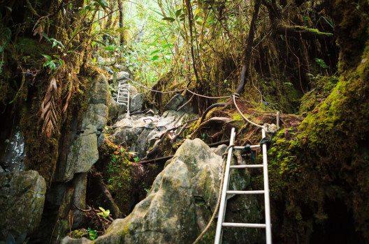 Wanderpfad im Gunung Mulu-Nationalpark (Bild: Juhku / Shutterstock.com)