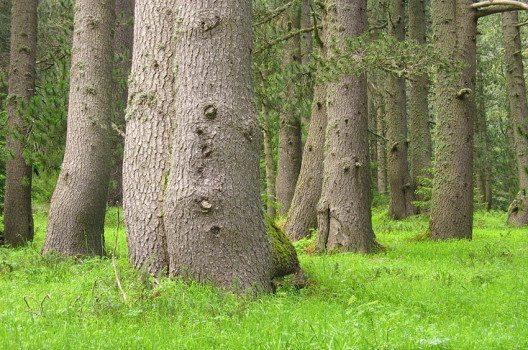 Rund 80 % der Parkfläche werden von Wald bedeckt. (Bild: Esther Westerveld, Wikimedia, CC)