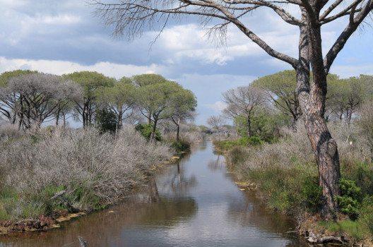 Im Mündungsgebiet des Flusses Ombrone gibt es noch die früher so allgegenwärtigen Sumpfgebiete. (Bild: Malgorzata Kistryn – shutterstock.com)