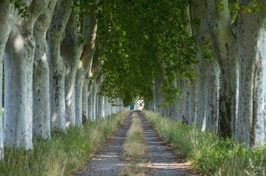 Strasse bei Arles (Bild: Claudio Giovanni Colombo – shutterstock.com)