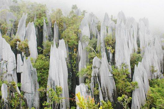 """Eine beliebte Tour im Gunung Mulu National Park führt zu den sogenannten """"Pinnacles"""". (Bild: Rafal Gaweda – shutterstock.com)"""