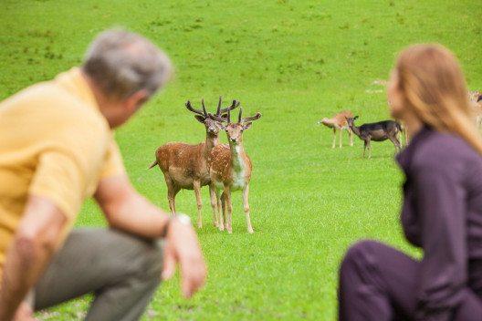Rehe im weitläufigen Wildgehege des Vollererhofs. (© Kurhotel Vollererhof)