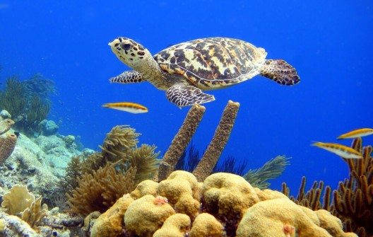 Die Küstengewässer von Bonaire sind auch als Taucherparadies bekannt und beliebt. (Bild: © Isabelle Kuehn - shutterstock.com)