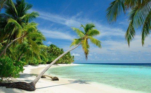Du suchst Palmen am Meer? Dann bist du auf den Malediven genau richtig. (Bild: © M.Rosenwirth - fotolia.com)