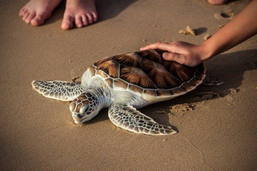 Little Andaman gilt auch als Refugium für einige seltene Arten von Meeresschildkröten, die hier ihre Eier ablegen. (Bild: © wonderisland - fotolia.com)