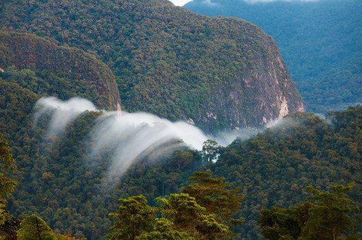 Die Insel Borneo ist eines der letzten Gebiete der Erde, in denen noch in grossem Umfang tropischer Regenwald zu finden ist. (Bild: Kim Briers – shutterstock.com)