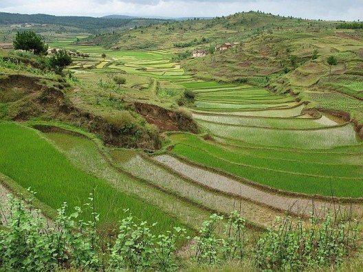 Reisterrassen soweit das Auge reicht.