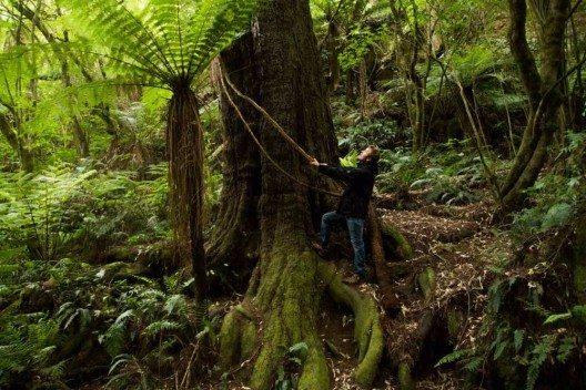 Ein Waldcampingplatz mitten im Dschungel