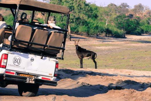 Es gibt sehr viele gut ausgebildete Safari-Guides.