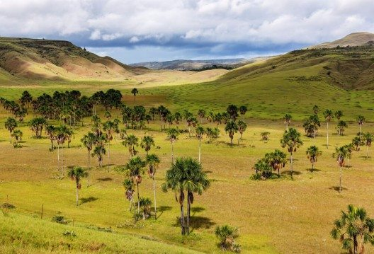Das Plateau der Grand Sabana ist das grösste und älteste der Erde. (Bild: © Vadim Petrakov - shutterstock.com)