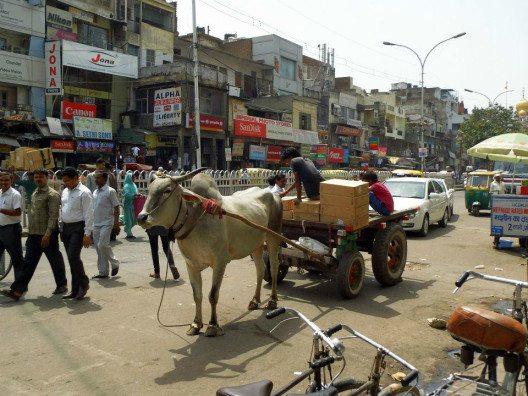Wie hier in Delhi findet man auf indischen Strassen Fahrzeuge aller Art. (Bild: © Julia Schattauer / bezirzt.de)