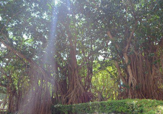 Kuala Lumpur überzeugt mit vielen Grünflächen. (Bild: © Julia Schattauer / bezirzt.de)