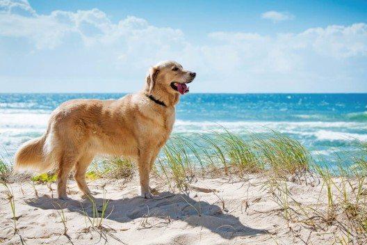 Nahezu jede Urlaubsregion verfügt über einen offiziellen Hundestrand. (Bild: © Martin Valigursky - shutterstock.com)