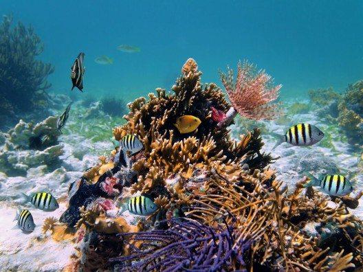 Der grösste Schatz der Turks- und Caicosinseln in der Karibik ist die einzigartige Meereswelt. (Bild: © Vilainecrevette - shutterstock.com)