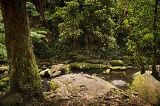 Der Great Otway Nationalpark. (Bild: © THPStock - shutterstock.com)