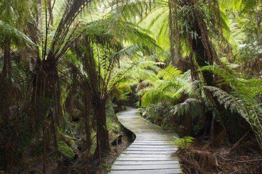 Der Maits-Rest-Regenwald ist Touristisch erschlossen. (Bild: © Dale Turner - shutterstock.com)