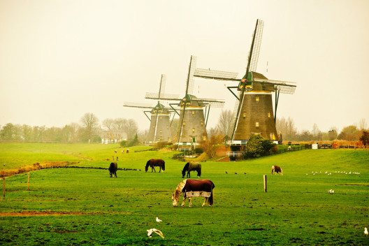Idylle pur vor den Toren Amsterdams. (Bild: © Marcin Niemiec / shutterstock.com)