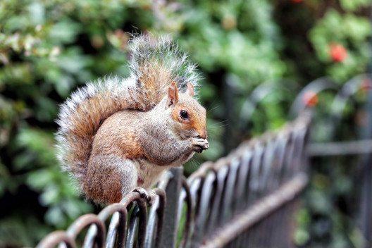 Natur kann man auch in der Grossstadt erleben (Bild: © cpaulfell / shutterstock.com)