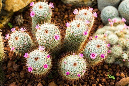 Kakteenhäuser gehören zur exotischen Pflanzenwelt in Botanischen Gärten dazu. (Bild: lightofchairat / Shutterstock.com© )