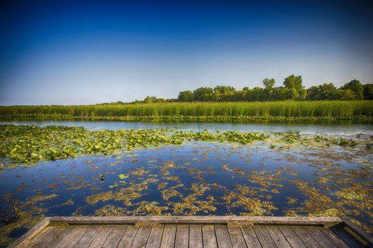 Die Everglade-Sümpfe an der Südspitze Floridas sind nicht nur gut 6000km² gross sondern auch UNESCO-Welterbe.