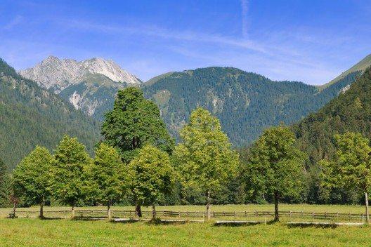 Naturfreunde steuern Pertisau bevorzugt wegen der zahllosen Möglichkeiten an um auf entspannten Spaziergängen einen der markantesten Landstriche von Tirol kennenzulernen. (Bild: © dinkaspell - shutterstock.com)