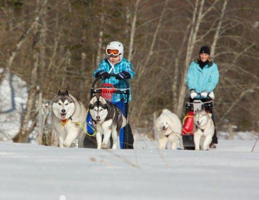 Eine erlebnisreiche Fahrt mit den Hundeschlitten (Bild: © Dachstein Tourismus AG)