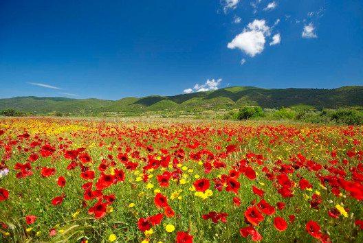 Chalkidiki wird in den Frühlingsmonaten bunt. (Bild: Halkidiki Tourismboard)
